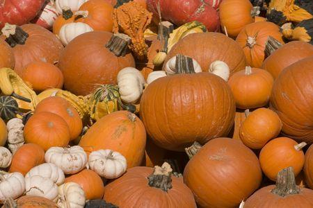 Pumpkin festival display at a local fair photo