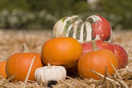 Beautiful pumpkin display on a haystack photo