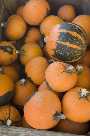 Pumpkins in a crate photo