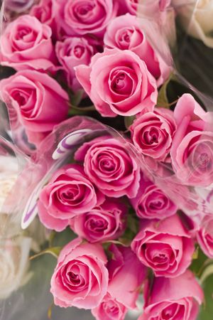 bouquet of pretty pink roses photo