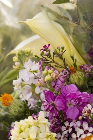 Freshly cut Spring flowers  Stock Photo