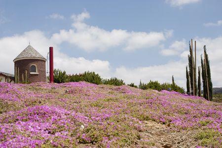 春にカリフォルニア州テメキュラ ワイン カントリー 写真素材