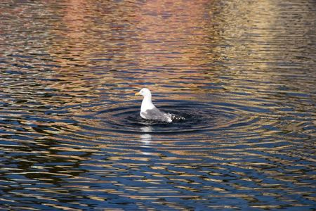 frolicking: a bird frolicking in the water Stock Photo