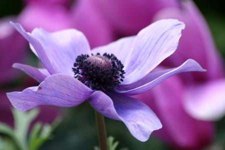 pretty purple blooms close up