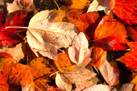 compost: Autumn leaves