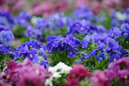 Spring flowers in planters in stock Stock Photo