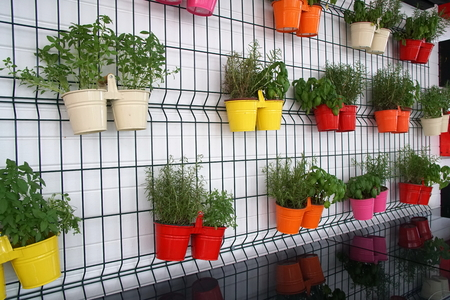Flowers in multicolored pots hang on the wall