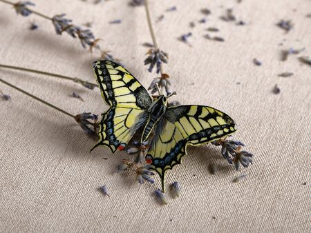 Handmade copper and silver jewelry in the shape of butterfly from the genus Papilio machaon. Handmade jewelry Reklamní fotografie