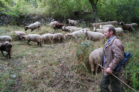 Agriculture concept. Shepherd with sheep on the field in mountains. Shepherd with his sheep on pasture