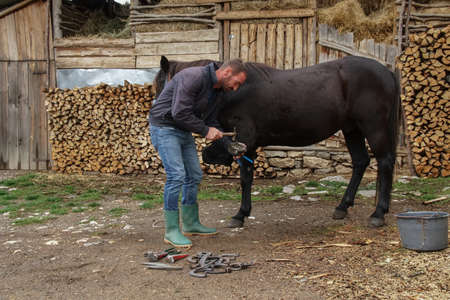 The master pincers removes the grown nail. A farrier works on a horse foot to clean it before creating a horseshoe for the animal Reklamní fotografie