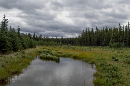 Denali National Park, Alaska Imagens - 79223349