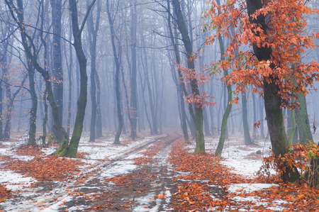 fall winter: First snow in the autumn forest Stock Photo