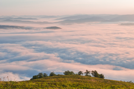 airiness: Summer mountain landscape with the sea fog and trees in the foreground