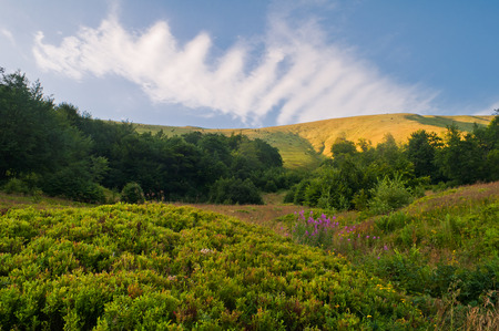 blueberry bushes: Summer mountain landscape with blueberry bushes and flowers willow-herb Stock Photo