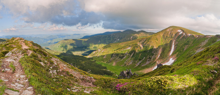 Magic pink rhododendron flowers on summer mountain. Dramatic scenery. Carpathian, Ukraine, Europe. Stock Photo