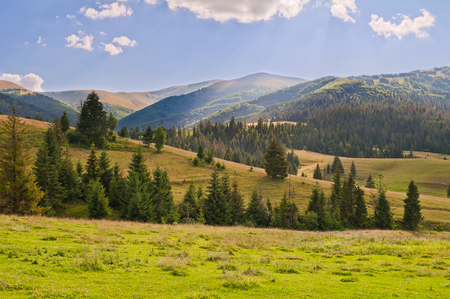 Summer mountain landscape, evening in the Carpathian mountains