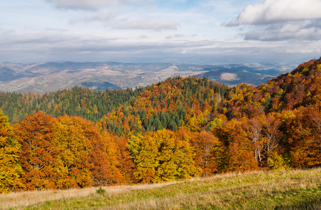 Yellow-orange colors of the autumn forest in the background of remote mountains. Autumn mountain landscape