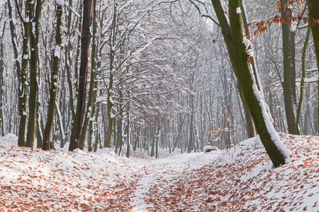 Fallen autumn leaves on white snow in the forest