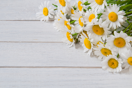Chamomile flowers on a white wooden table Stock Photo