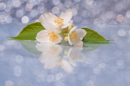 Branch of white jasmine flowers on a background bokeh