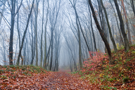 Misty morning in autumn forest Stock Photo