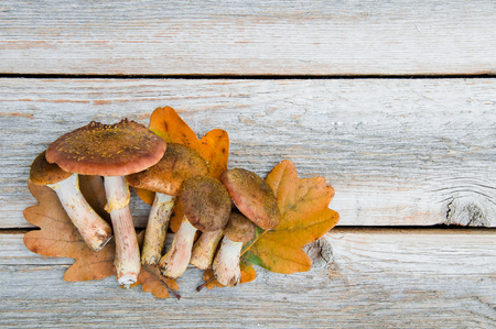 Autumn honey mushrooms (Armillaria mellea) on a wooden table