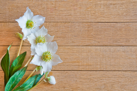 Hellebore flowers (helleborus orientalis) on wooden background Stock Photo