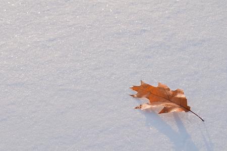 Leaf white pure snow Stock Photo