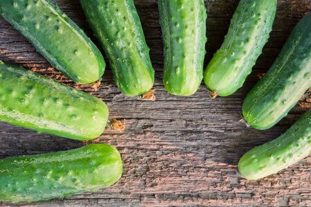 Fresh organic cucumbers on the old wooden background