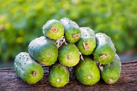 Red green cucumbers Фото со стока