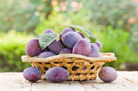 Fresh organic plums in a wicker bowl on a wooden table in the garden Фото со стока