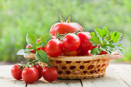 Fresh ripe tomatoes in a wicker plate on a wooden table