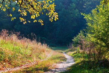 Early autumn in the forest. Landscape with road and branch of autumn leaves