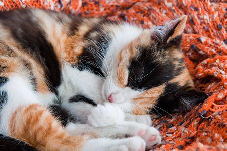 Cute little kitten sleeping on a woolen blanket Фото со стока