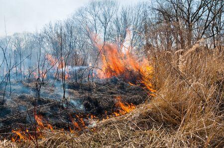 Fire. Burning dry grass burns
