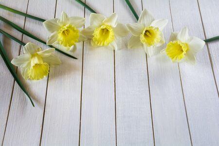 Beautiful flowers of light yellow daffodils on white wooden background
