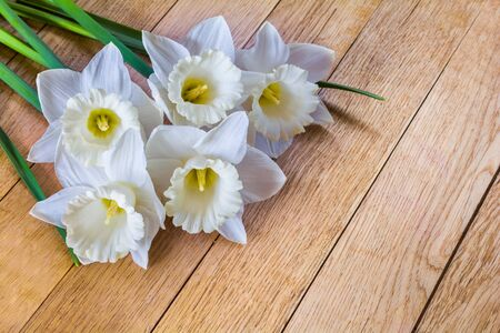 Beautiful flowers of white daffodils on wooden background Stock Photo