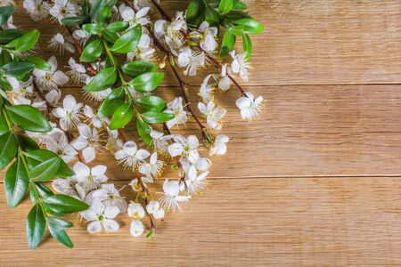 White spring blossom of fruit trees on a wooden table