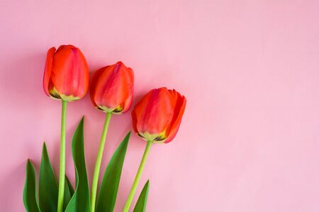 Bouquet of red tulips on a pink background