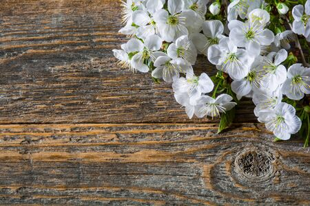 White cherry blossom on an old wooden table