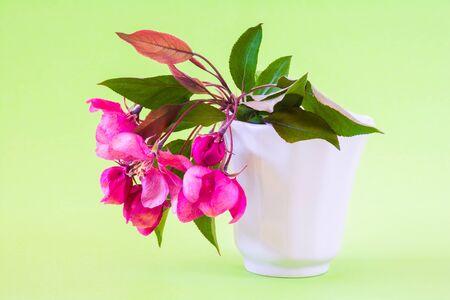 Pink apple spring flowers in vase on light green background. Still life Stock Photo