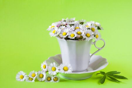 Beautiful bouquet of white daisies in a white cup on a light green background Stock Photo