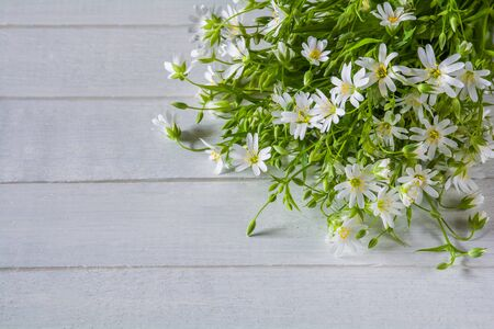 Bouquet of white wildflowers on a white wooden table. Stellaria holostea Stock Photo