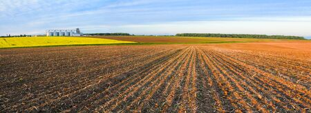 Agricultural fields and granaries on the horizon. Panoramic image. Rapeseed blooms. Young shoots of plants sprout in the ranks of arable land