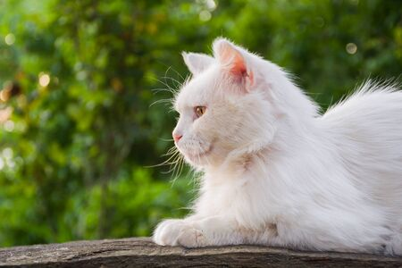 White cat sitting on a wooden bench