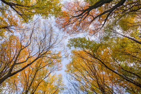 Top of trees of autumn forest in the colors of autumn