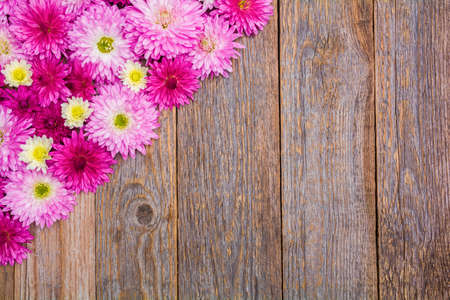 Beautiful pink chrysanthemum flowers on a wooden table Stock Photo