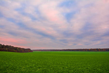 Green field of young wheat sprouts, forest on the horizon and sky in sunset colors