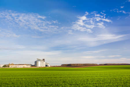 Green field of young wheat shoots and grain elevators with outbuildings on the horizon Stock Photo