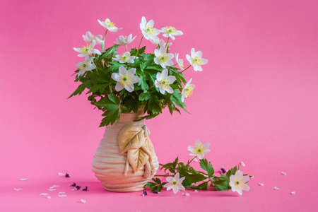 Bouquet of white wildflowers in a vase on a pink background. Anemone nemorosa